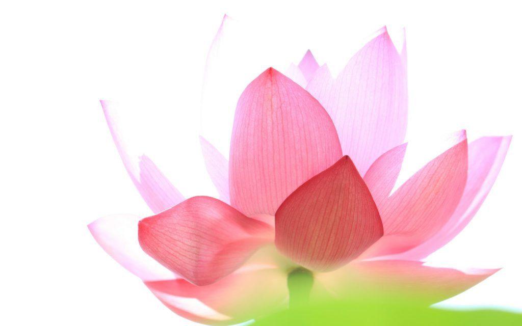 Yoga autêntico
